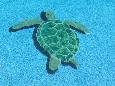 Green Sea Turtle – 3D POOL ART